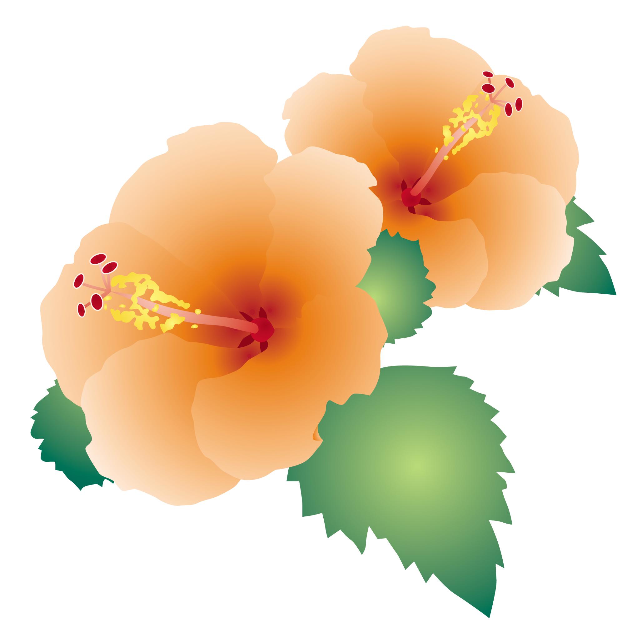 花のイラスト 無料 7月